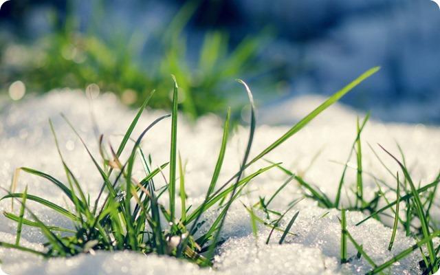 7005638-grass-snow