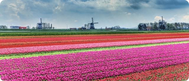 miricle_Dutch